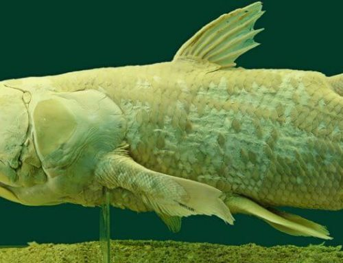 The Coelacanth And The Mysteries Of The Deep